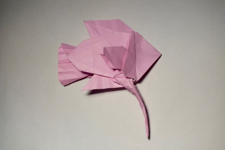 Under the Sea Origami : Duy Nguyen : 9781402757877 | 480x720