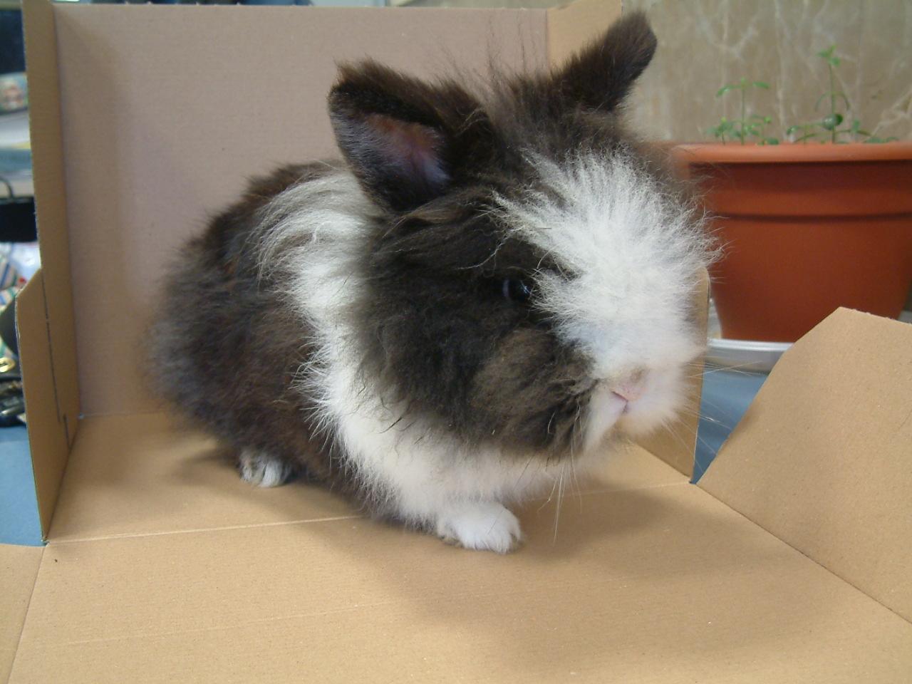 foto di un coniglio